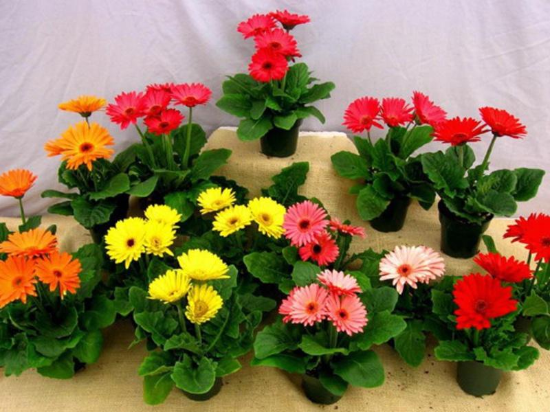 Весенняя акция «Цветы добра»
